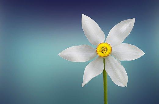 Flower, White, Beautiful, Beauty, Bloom
