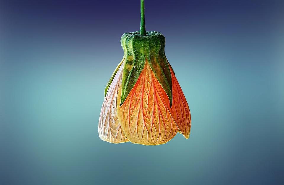 free photo flower, beautiful, beauty, bloom  free image on, Beautiful flower