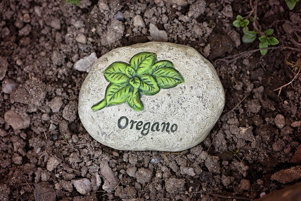 Garten Erde Boden Kostenloses Foto Auf Pixabay