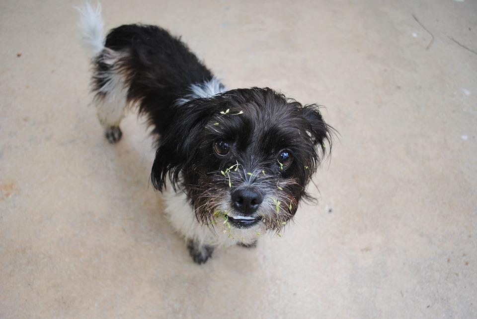Dog, Mutt, Pet, Animal, Canine, Doggy, Cute, Dirty
