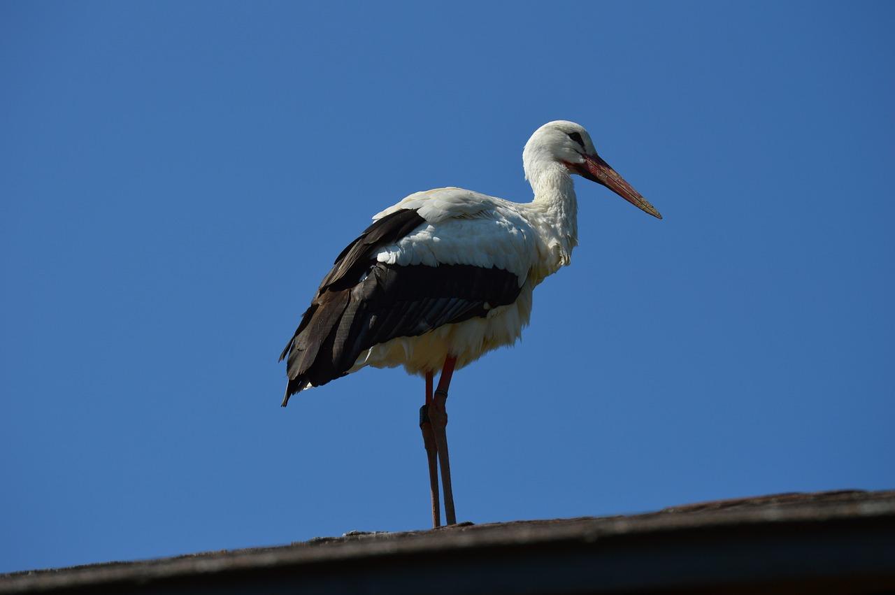 Самые верные птицы фото того