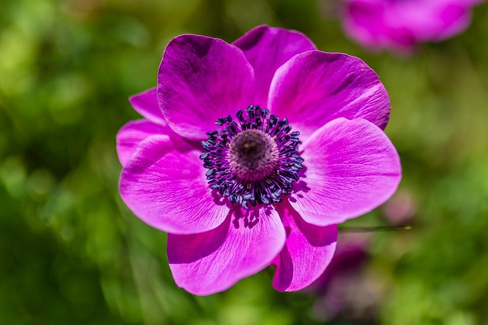 Flor Primavera Color · Foto gratis en Pixabay