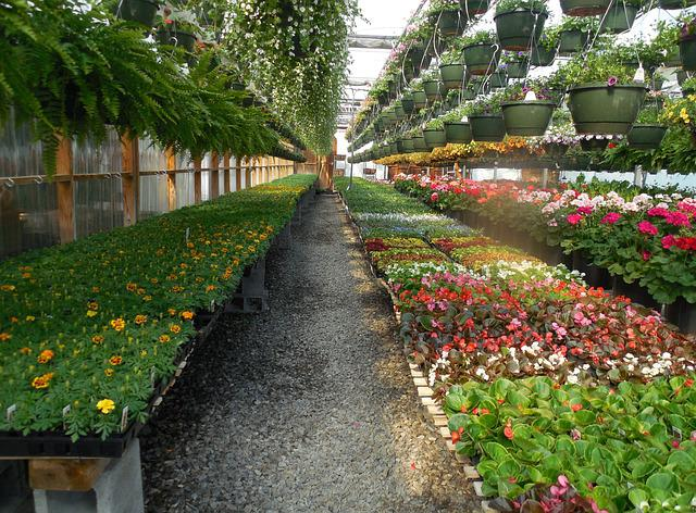 Free Photo Flowers Greenhouse Garden Plant Free