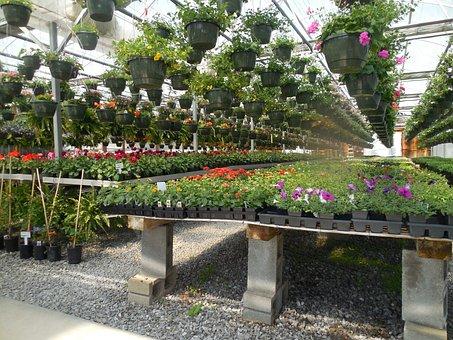 Flowers, Greenhouse, Garden, Plant
