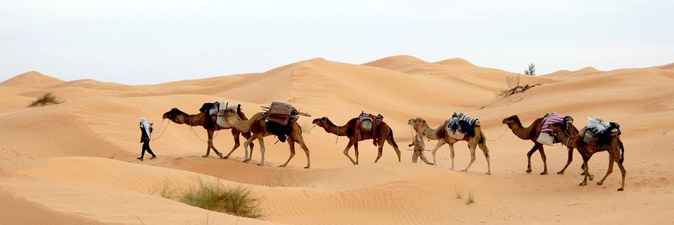 Tunisko, Poušť, Karavana, Písek, Sahara, Bedouin