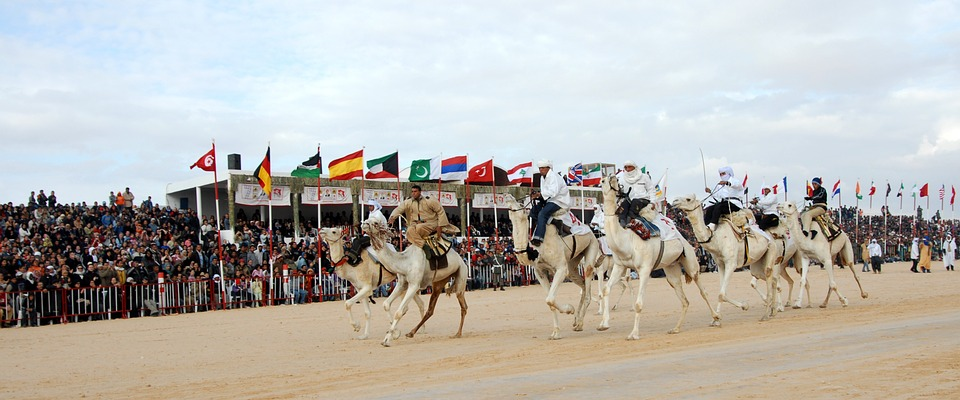 Camel racing event