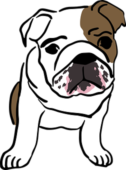 English, Bulldog, Baby, Mammal, Puppy