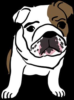 English, Bulldog, Baby, Mammal, Puppy