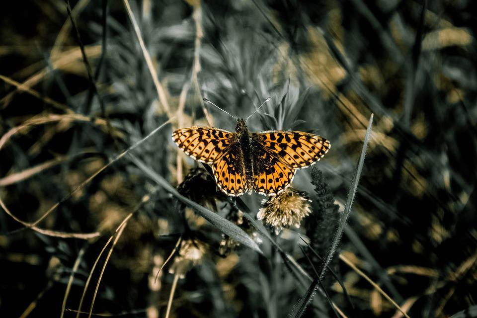 Butterfly, Nature, Insect, Yellow, Wings