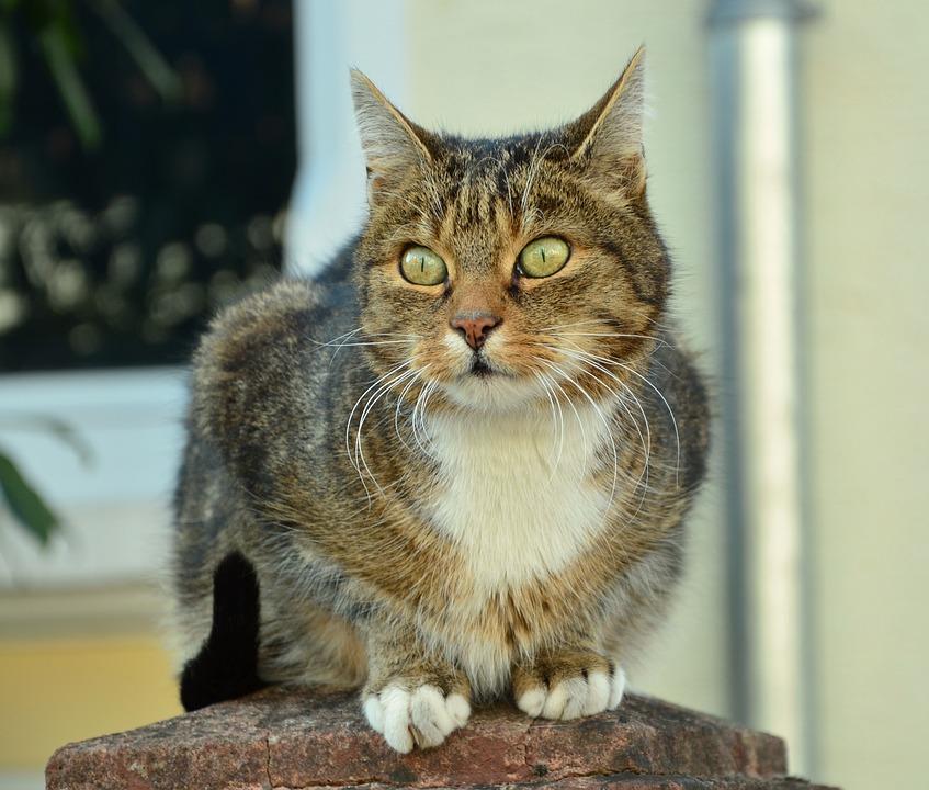d9cef8730 Mačka Mačacie Oči Zviera - Fotografia zdarma na Pixabay
