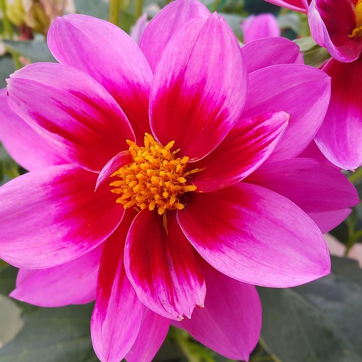 Bildresultat för blomma