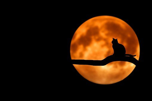 Tree, Cat, Silhouette, Moon, Full Moon
