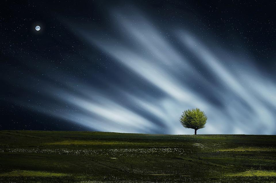 ツリー, フィールド, 月, 夜の空, 牧草地, 草原, 草, 自然, 風景, アウトドア, 単一のツリー