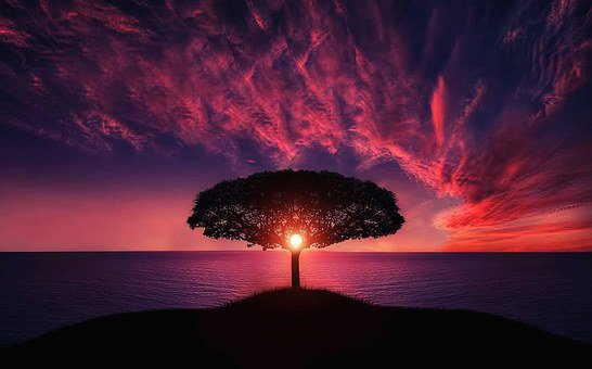 silhouette of tree near body of water during beautiful sunset