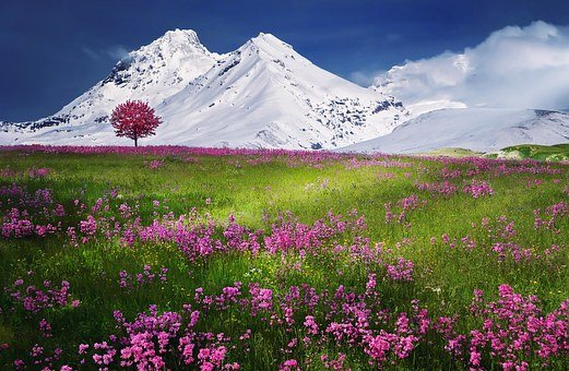 3 000 Free Mountain Meadow Meadow Images Pixabay Images, Photos, Reviews