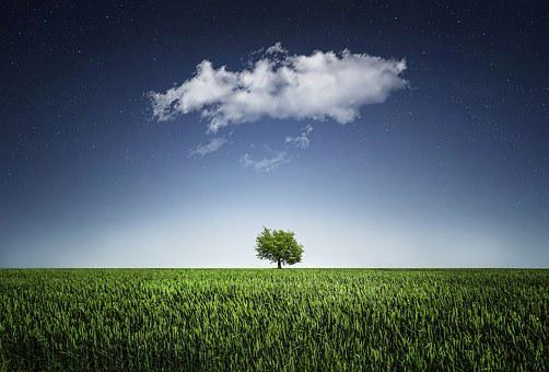 Tree, Natur, Nightsky, Cloud, Meadow