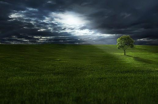 Tree, Meadow, Clouds, Grass, Landscape