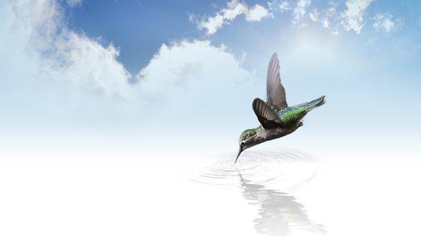 Colibri, Bird, En Volant, Aile