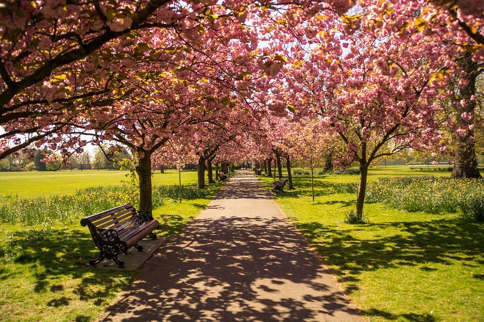 Park, Trees, Path, Landscape, Garden, Hyde Park, Europe