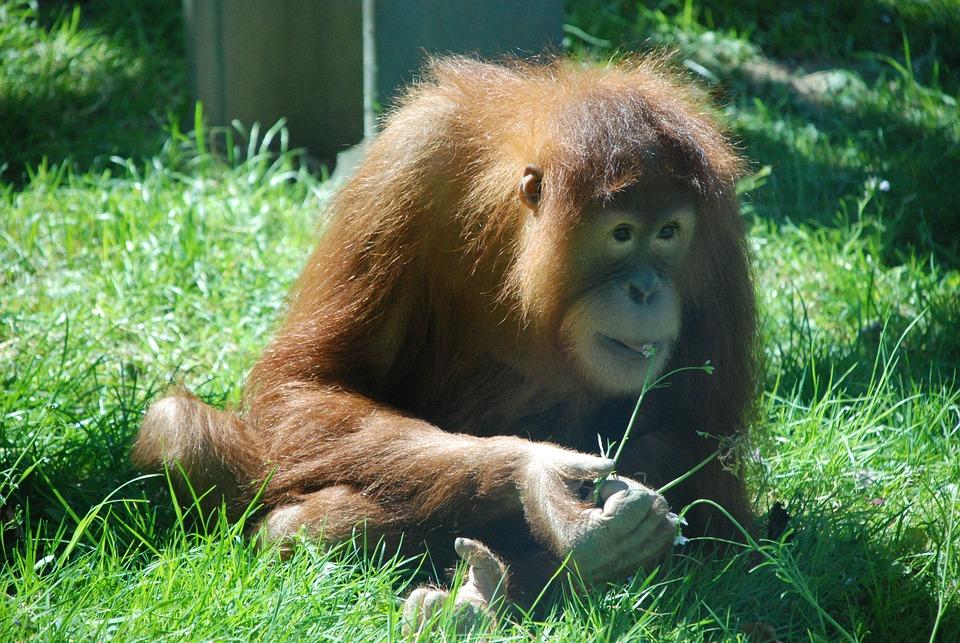 猴子 动物园 动物 · pixabay上的免费照片
