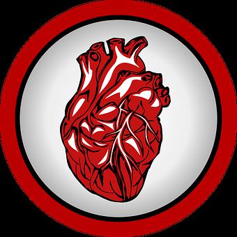 Herz, Herzschlag, Medizin, Frequenz