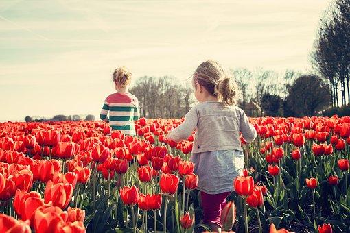 女の子, 子供, チューリップ, オランダ, 春, 自然, ブルーム, 植物