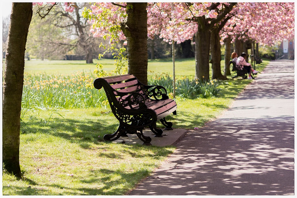 Free Photo Park Bench Nature Spring Free Image On