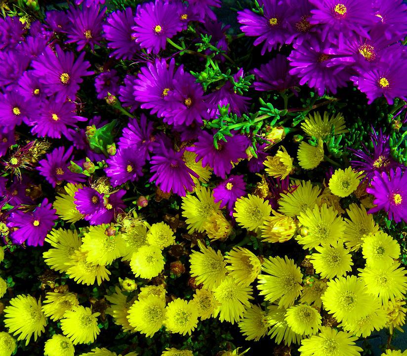 Purple yellow flowers spring free photo on pixabay purple yellow flowers spring flower flower garden mightylinksfo