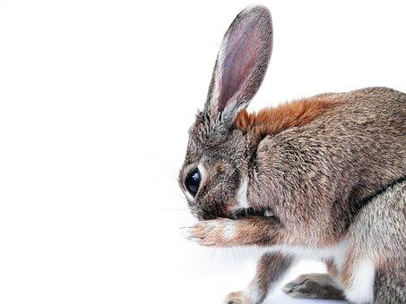 Rabbit Cute Paw Animal Bunny Ears Fur Port