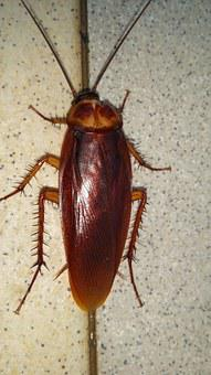 Beast, Beetle, Cockroach