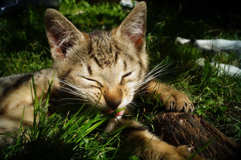 1fe445b4993d Γάτα Ζώο Γατάκι Κατοικίδιο - Δωρεάν φωτογραφία στο Pixabay