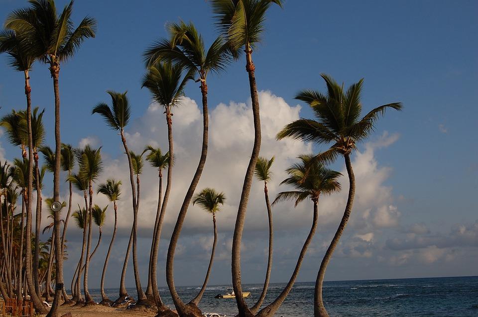 Punta Cana, Karibský, Dlaně, Hotel, Příroda, Beach