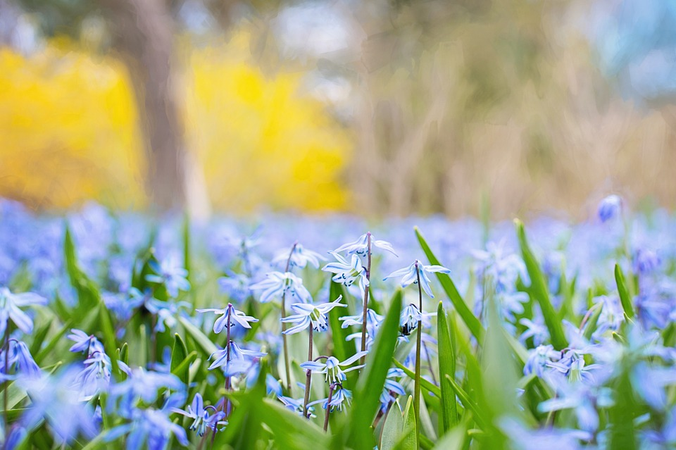 Spring Flowers Country Nature Free Photo On Pixabay