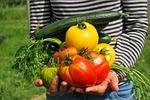 warzywa, ogrodnik, ogród warzywny