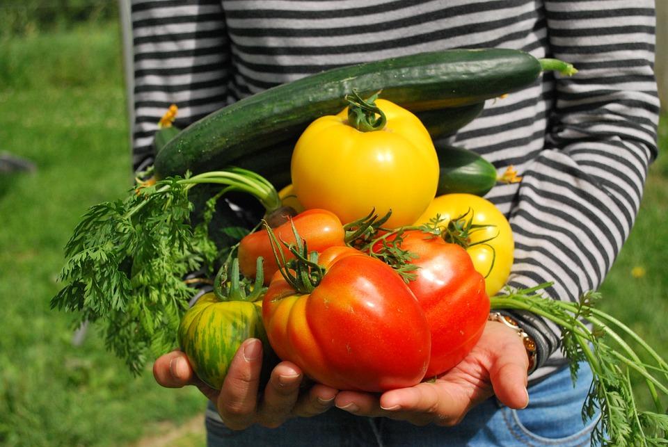 Verdure, Giardiniere, Orto