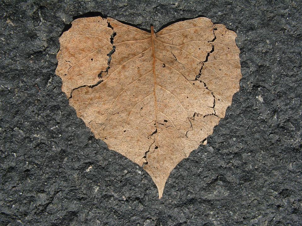 中心部, 壊れた, 自然の愛, 形状, 葉, 秋, アスファルト, 乾燥, クラック, ひびの入った