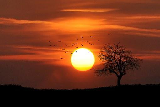 Sunset, Tree, Dusk, Dawn, Red, Glow