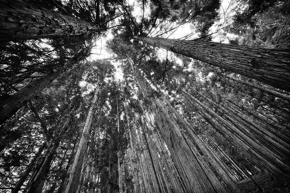 Legno Bianco E Nero : Foresta natura in bianco e nero · foto gratis su pixabay