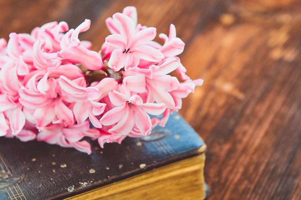 free photo  hyacinth  book  flower  flowers