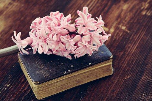 风信子, 花, 鲜花, 粉红色, 春天的花, 本书, 老书, 使用, 穿, 木