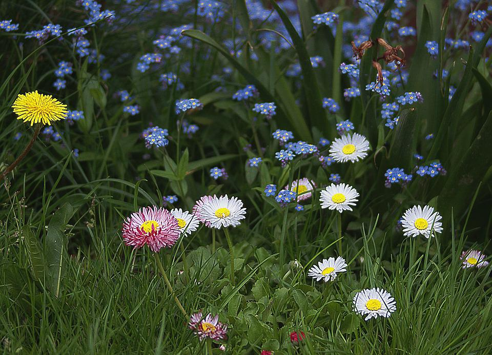 Foto Gratis: Flores, Pequenas Flores