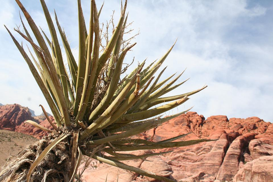 desert red rock canyon plant free photo on pixabay