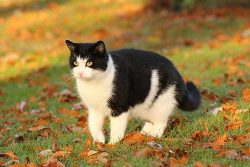 Katze, Tier, Niedlich, Haustier