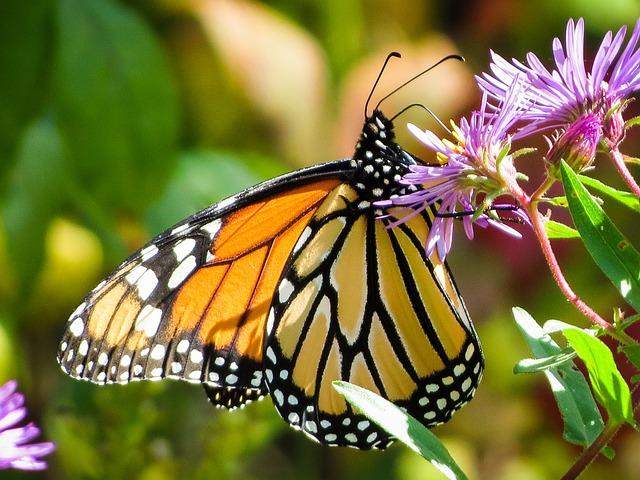 Foto gratis farfalla insetto monarca natura immagine - Immagini di farfalle a colori ...