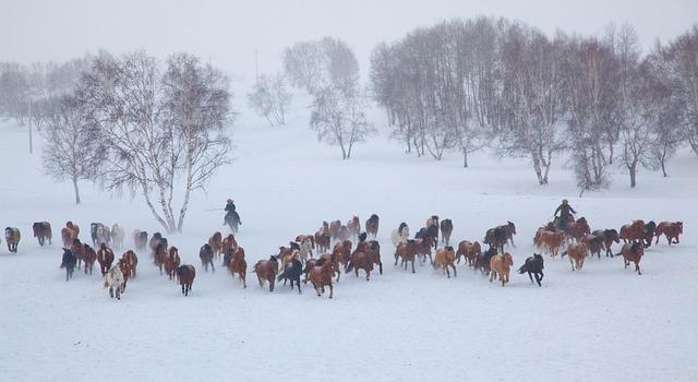 Group Snow Horses 183 Free Photo On Pixabay