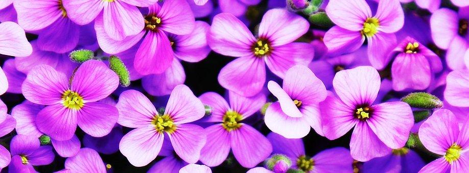 Paesaggio Primavera Immagini Scarica Immagini Gratis Pixabay