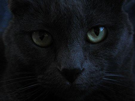Cat Black Cat Green Eyes Domestic Pet Feli