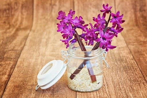 Hyacinth, Flowers, Pink, Fragrant