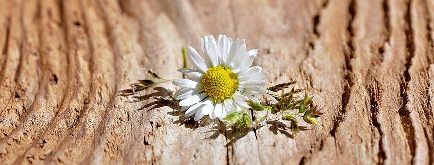 Фото неизвестные цветы