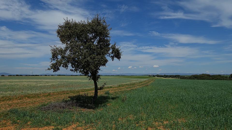 arbre ciel bleu vert nature champ paysage vision - Arbre Ciel